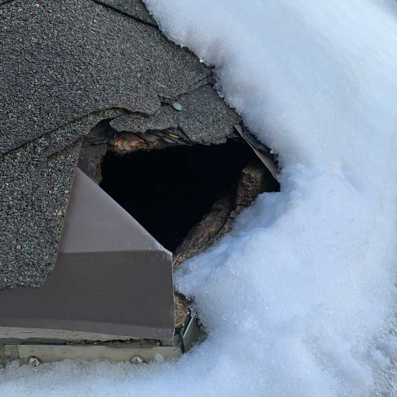Covering holes in your roof is necessary for Bat Removal And Exclusion