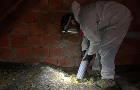 Attic Cleanup and Attic Sanitation  in Toledo Ohio.  Hire Buckeye Wildlife Solutions NW Bat Removal Toledo Ohio Team for attic restoration.
