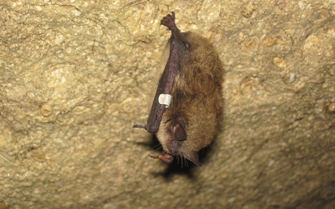 Get Rid of Bats in Toledo Ohio
